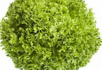 Салат Lettuce Salanova Green Incised Leaf