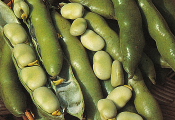 Бобы Vicia faba Sutton