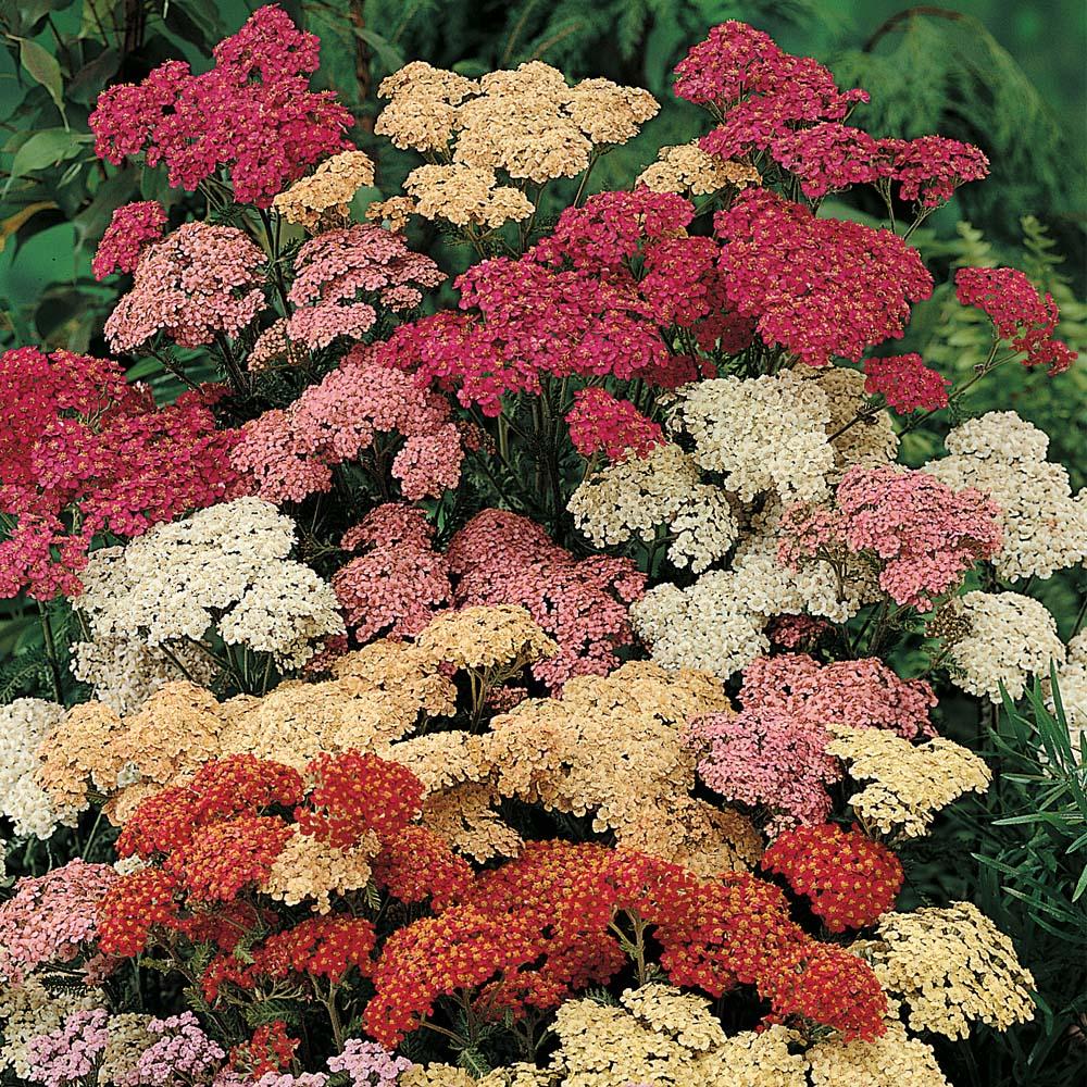 Садовые цветы картинки и названия многолетние