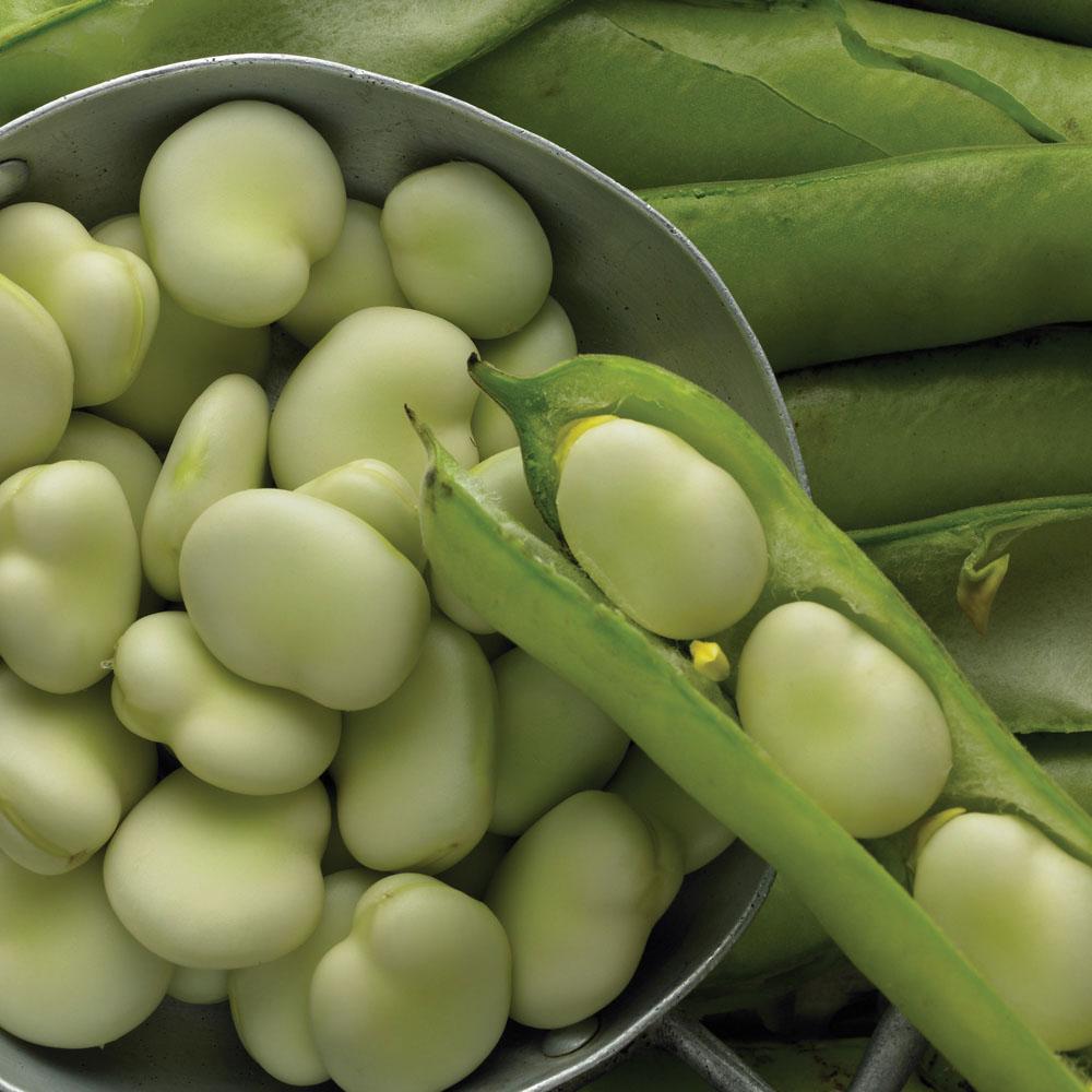 награждении картинки овоща бобы поздравления