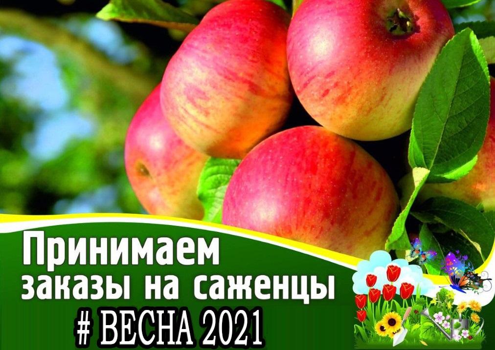 интернет-магазин сады москвы каталог 2021