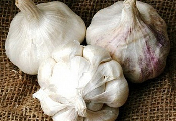 Чеснок Garlic Early Italian